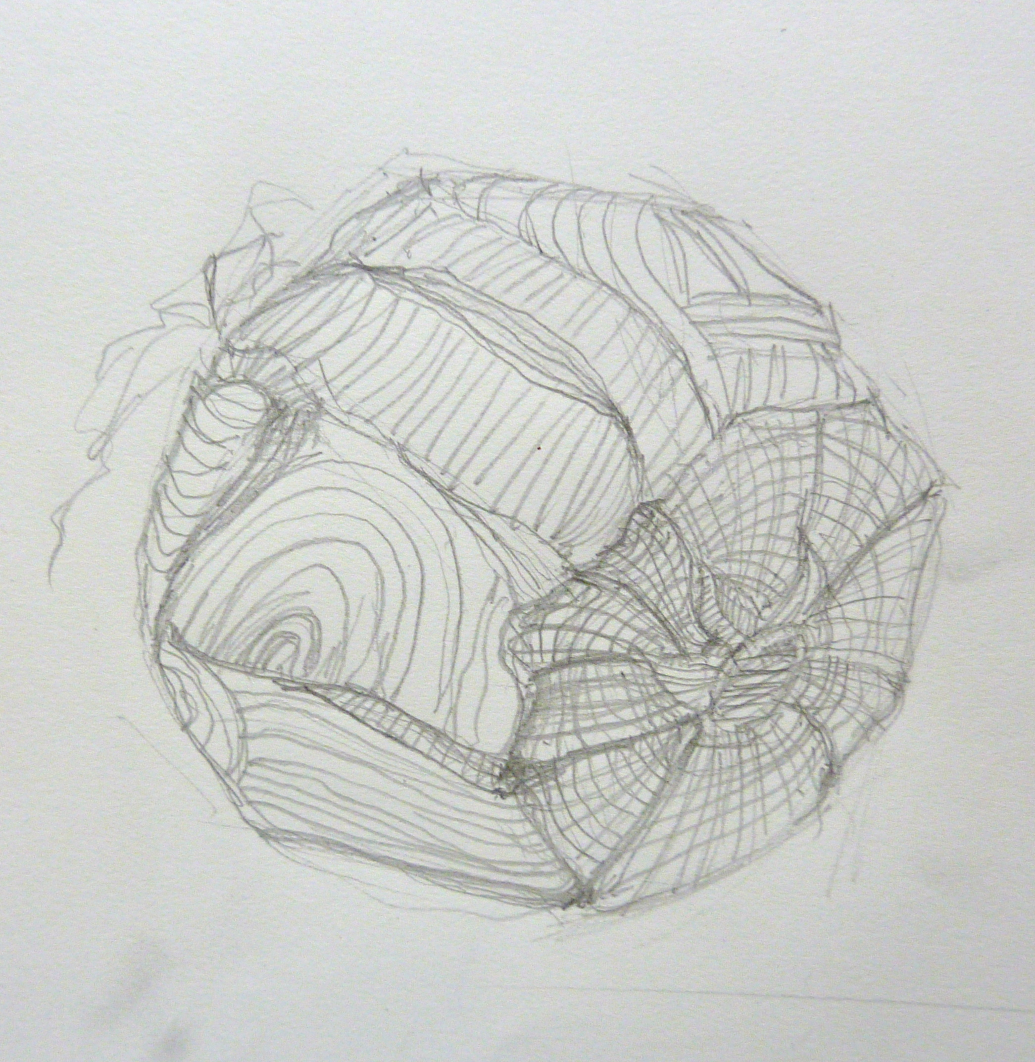 Cross Contour Line Drawing Fruit : October marlene lee fine art