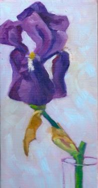 Iris Study #4, 2013