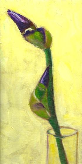 Two Iris Buds