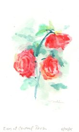 Red Roses at Central Park, watercolor, 8x5