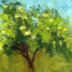 Elderberry Tree, oil, 6 x 8 inches, SOLD