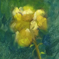 Yellow Daffodil, 4 1/2 x 4 1/2 inches , oil on paper