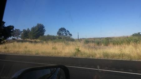 Yolo Causeway Trees.jpg