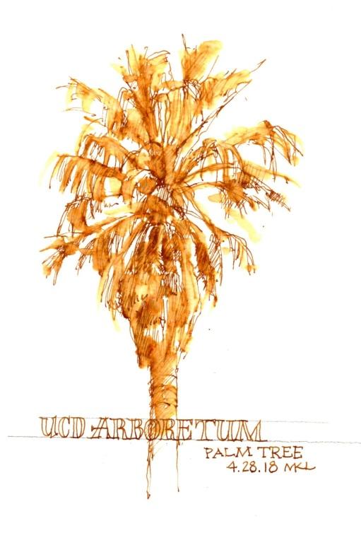 042818_Palm Tree