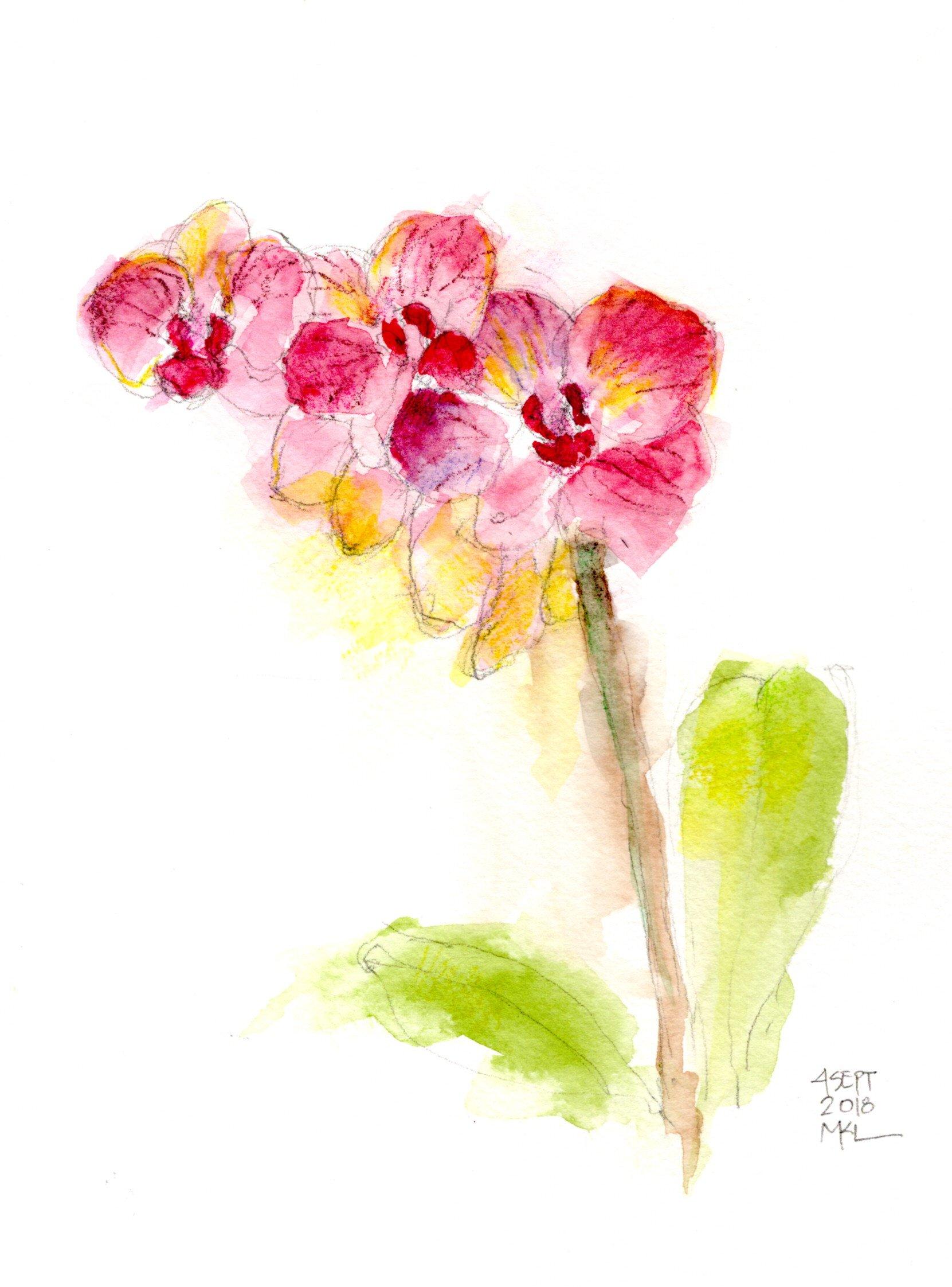 Condolences Orchids