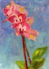 19 condolences orchid