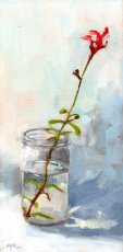 20 red autumn sage in a jar