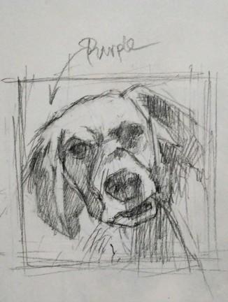 Pippa sketch