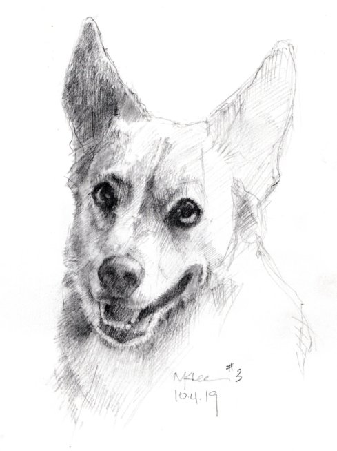 Pencil Dog Portrait 100419