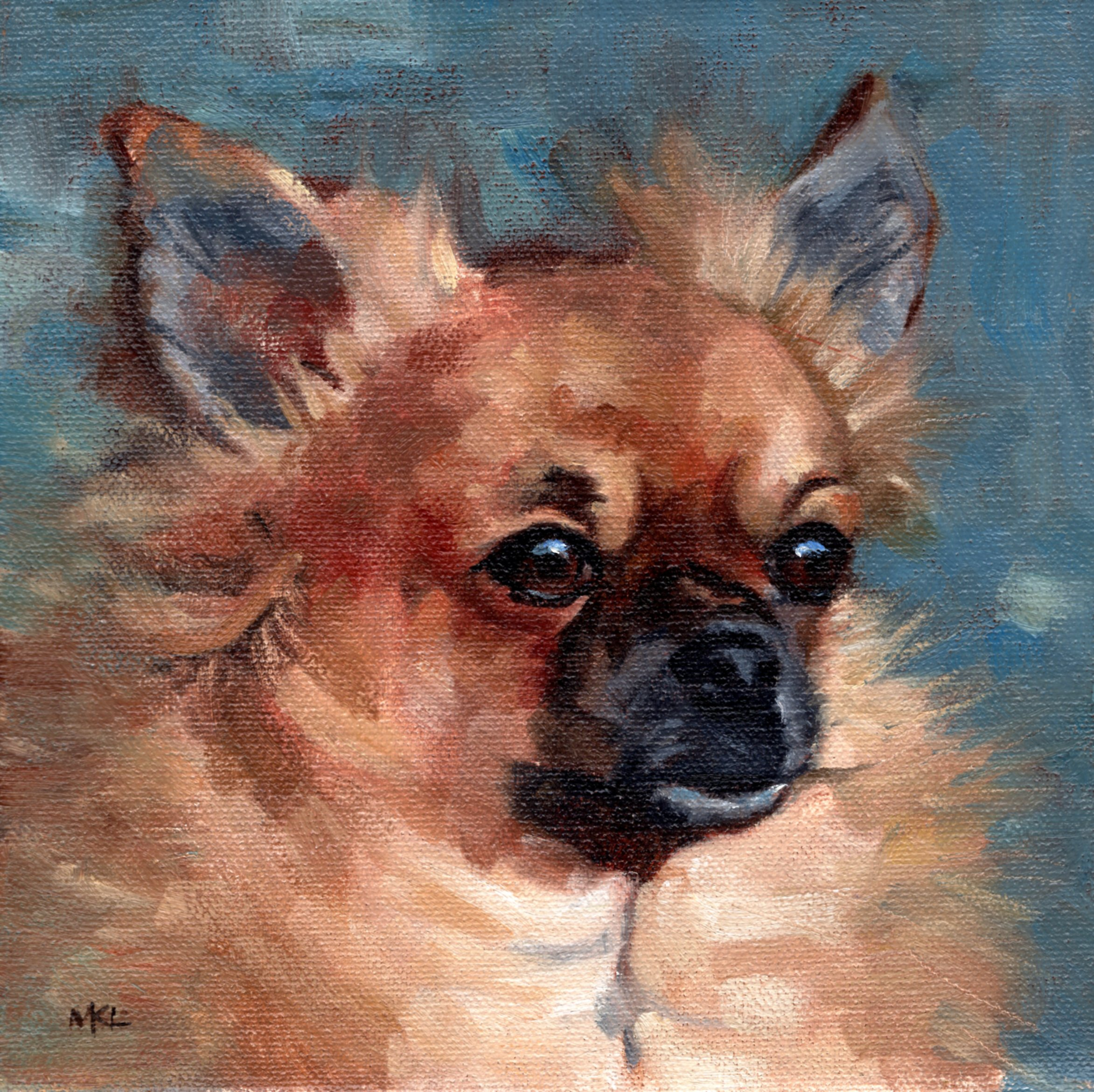 Long Haired Chihuahua_8x8sc_20200526