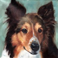Sheltie, 8 x 8 inches, oil